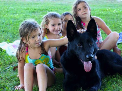 protection-dogs-plus-family-dog